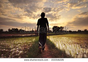 stock-photo-african-kids-rice-plantation-153316226 (1)
