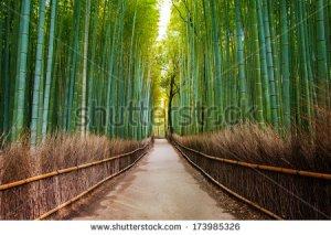 stock-photo-bamboo-forest-in-japan-arashiyama-kyoto-173985326 peace paix
