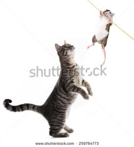 stock-photo-cat-and-mouse-259764773 chat souris