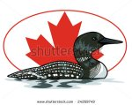 stock-vector-vector-illustration-of-a-loon-in-front-of-a-canadian-maple-leaf-background-contained-in-clipping-24269749 huard