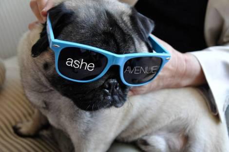 Ashe-Avenue-swag