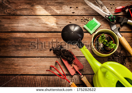 stock-photo-gardening-tools-watering-can-seeds-plants-and-soil-on-vintage-wooden-table-spring-in-the-garden-175282622