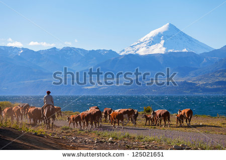 stock-photo-gauchos-and-herd-of-cows-on-the-background-the-volcano-lanin-patagonia-argentina-125021651