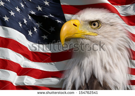 stock-photo-north-american-bald-eagle-154762541 eagle