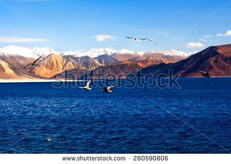 stock-photo-ruddy-shelducks-flying-off-at-pangong-tso-lake-in-india-pangong-lake-in-ladakh-jammu-and-kashmir-280590806