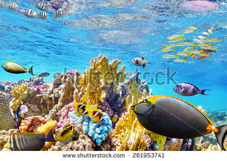 stock-photo-wonderful-and-beautiful-underwater-world-with-corals-and-tropical-fish-261953741 corail