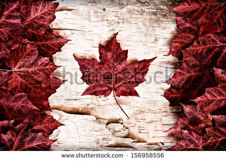 stock-photo-the-image-of-the-flag-of-canada-constructed-entirely-out-of-genuine-maple-leaves-and-white-birch-156958556 canada