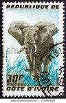 stock-photo-ivory-coast-circa-a-stamp-printed-in-ivory-coast-shows-african-elephant-loxodonta-africana-135489092