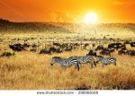 stock-photo-african-landscape-zebras-herd-and-antelopes-wildebeest-at-sunset-kenya-296968166