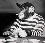 chimpanzee-joueur