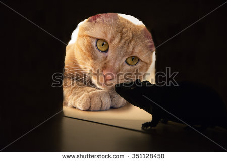 stock-photo-cat-catching-a-mouse-inside-the-lair-351128450