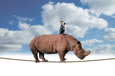 rhino-and-boy-balancing-on-rope