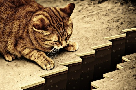 cat-1055602_960_720.jpg